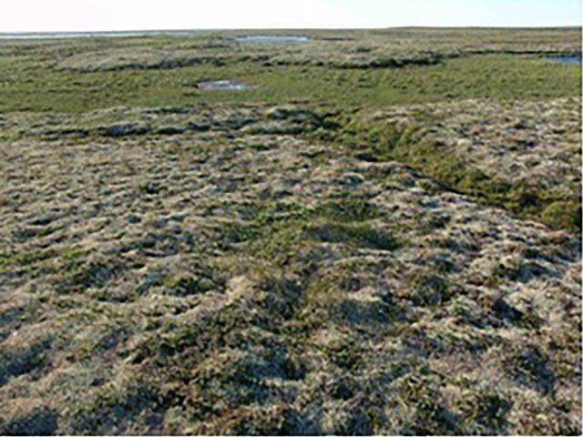 Система наземно-космического мониторинга динамики растительного покрова Крайнего Севера