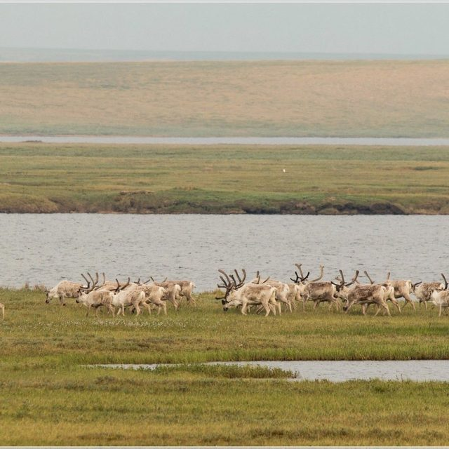 Cooperation agreement with Taimyr Nature Reserves